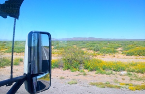 My trucks window is a Canvas.  Arizona wildflowers blooming